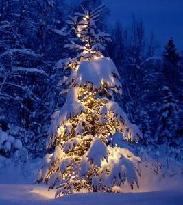 small_christmas-tree